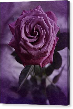 Canvas Print featuring the photograph Purple Rose Of December by Richard Cummings