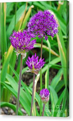 Purple Sensation Canvas Print by Nancy Mueller
