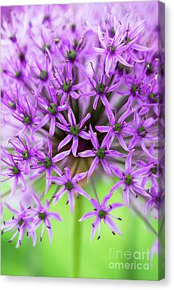 Purple Sensation Canvas Print by Tim Gainey