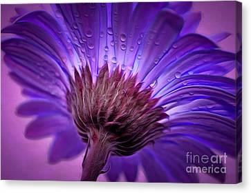 Purple Serenity Canvas Print by Krissy Katsimbras