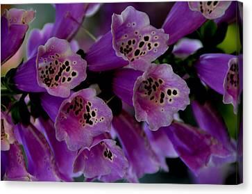 Purple Silk Canvas Print by Lyle  Huisken
