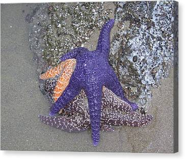 Canvas Print featuring the photograph Purple Starfish by Angi Parks