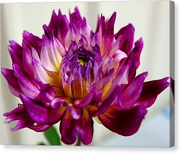 Canvas Print featuring the photograph Purple Sunset Flower 1 by Marianne Dow