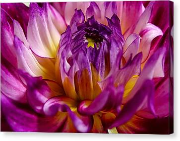 Canvas Print featuring the photograph Purple Sunset Flower 2 by Marianne Dow