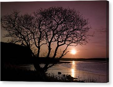 Purple Sunset With Tree And Lake Canvas Print by Gabor Pozsgai