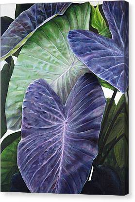 Purple Taro Canvas Print by Sandra Blazel - Printscapes