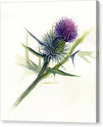 Purple Thistle Canvas Print by Leslie Redhead