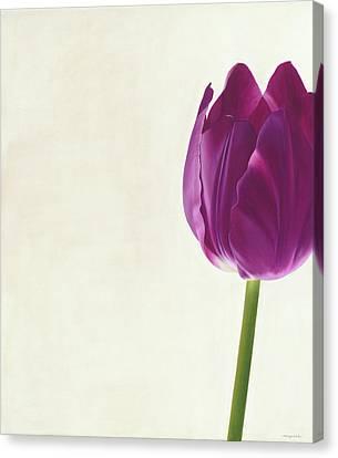 Purple Tulip Canvas Print by Rita Magos
