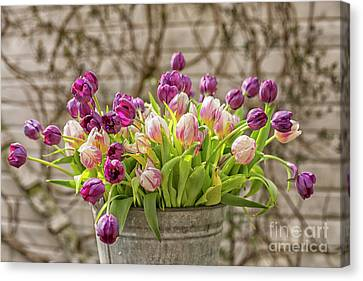 Canvas Print featuring the photograph Purple Tulips In A Bucket by Patricia Hofmeester