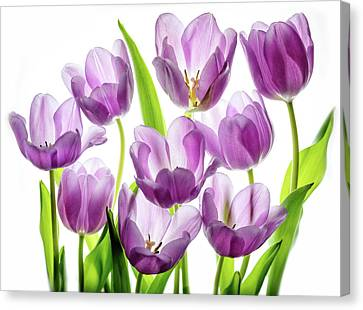 Canvas Print featuring the photograph Purple Tulips by Rebecca Cozart