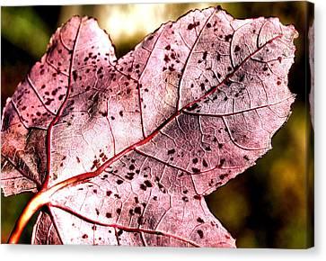 Purple Vein Canvas Print by Karen M Scovill