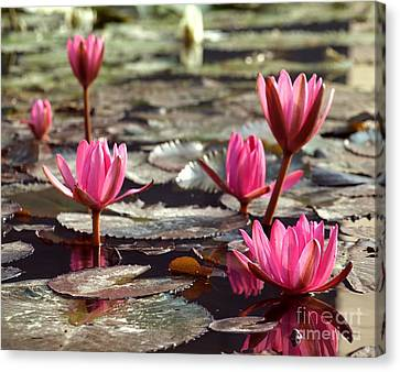 Purple Water Lillies Canvas Print