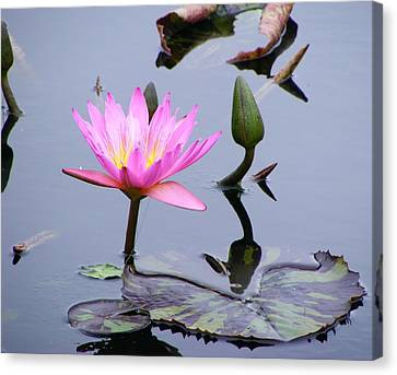 Canvas Print featuring the photograph Purple Waterlily With Pod by Margie Avellino