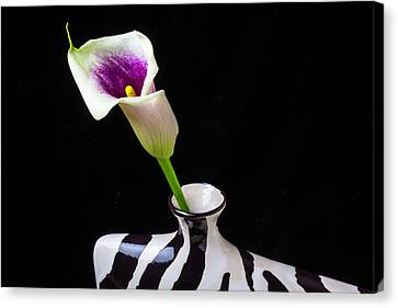 Purple White Calla In Vase Canvas Print by Garry Gay