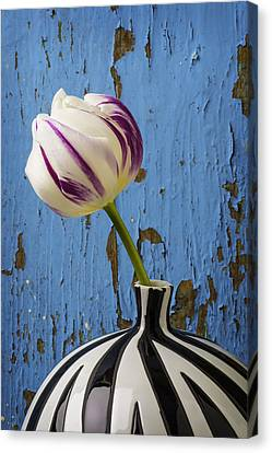 Purple White Tulip Against Blue Wall Canvas Print