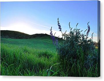 Canvas Print featuring the photograph Purple Wildflowers In Beautiful Green Pastures by Matt Harang