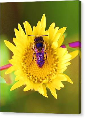 Purple Wings Canvas Print by John King