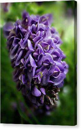 Purple Wisteria Canvas Print by Greg and Chrystal Mimbs