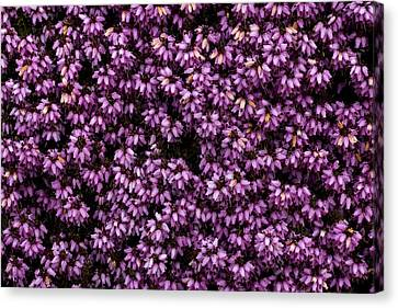Purpleness Canvas Print by John Gusky