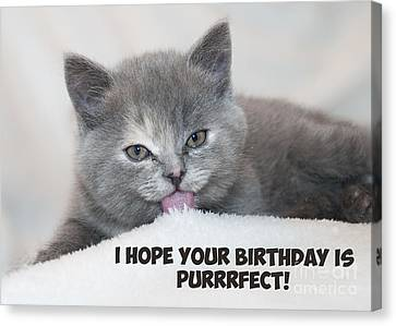 Canvas Print featuring the digital art Purrfect Birthday Cat by JH Designs