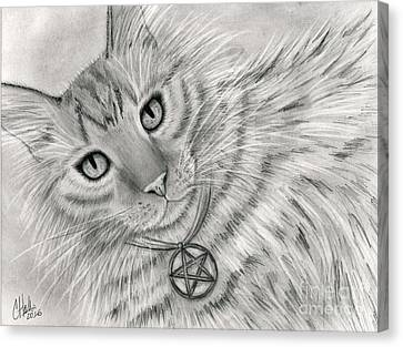 Canvas Print featuring the drawing Purrfect Page Of Pentacles - Tarot Card Art by Carrie Hawks