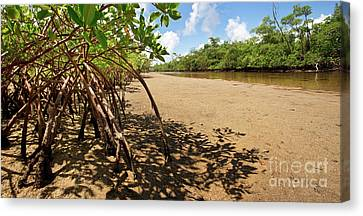 Mangrove Forest Canvas Print - Putting Down Roots - Mangrove Coast In South Florida by Matt Tilghman