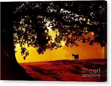 Pygmy In Morning Light Canvas Print by Thomas R Fletcher