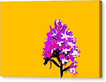 Orange Pyramid Orchid  Canvas Print by Richard Patmore