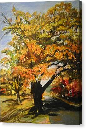 Quabbin Tree Canvas Print