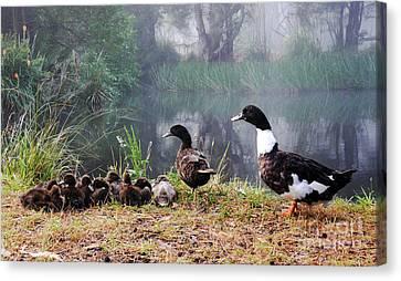 Quack Quack Ducks And A Pond Canvas Print