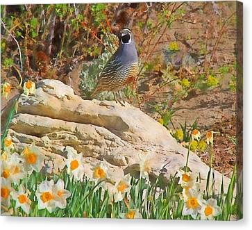 Quail And Daffies Canvas Print