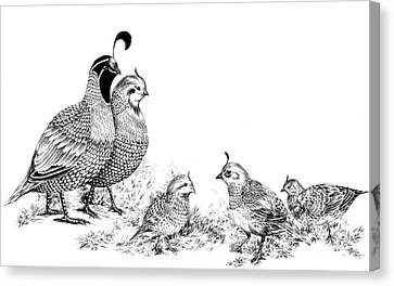 Quail Family Outing Canvas Print