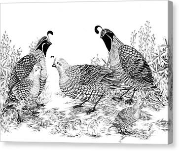 Quail Family Reunion Canvas Print