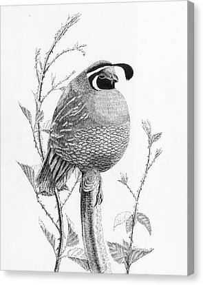 Quail Sentry Canvas Print