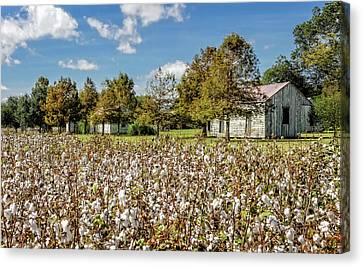 Quarters Viewed From Cotton Field - Frogmore Plantation Canvas Print by Frank J Benz