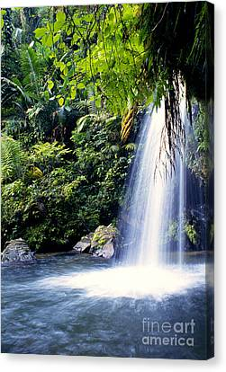 El Yunque Canvas Print - Quebrada Juan Diego Waterfall by Thomas R Fletcher