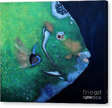 Queen Angelfish Canvas Print