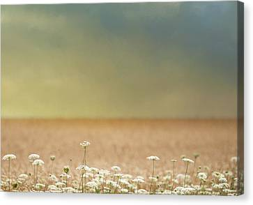 Canvas Print featuring the photograph Queen Anne And Wheat by Rebecca Cozart