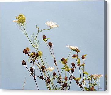 Queen Anne's Lace And Dried Clovers Canvas Print by Lise Winne
