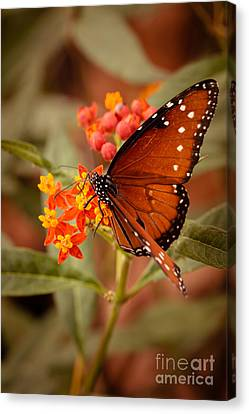 Queen Butterfly On Flowers Canvas Print by Ana V Ramirez