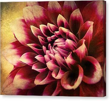 Queen Dahlia Canvas Print