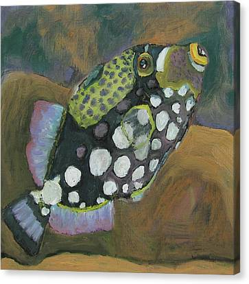 Queen Trigger Fish Canvas Print