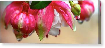 Canvas Print featuring the photograph Quenched by Corinne Rhode