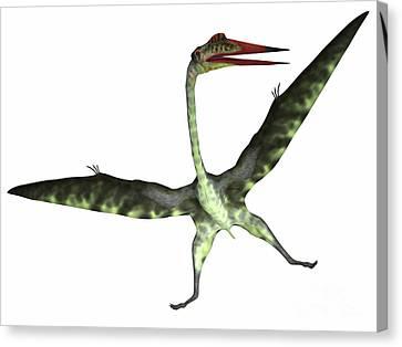 Quetzalcoatlus Reptile On White Canvas Print