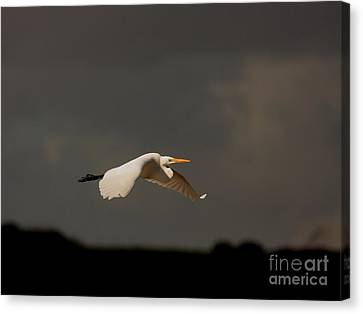 Quiet Before The Storm Canvas Print by Wingsdomain Art and Photography