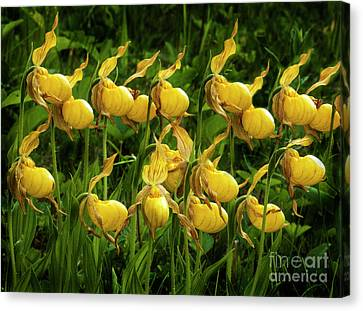 Quiet By Nature Canvas Print by Bob Christopher