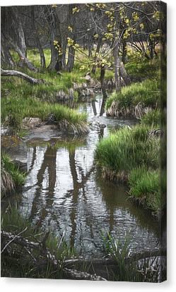 Quiet Stream Canvas Print by Scott Norris