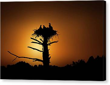 Quiet Time On The Nest Canvas Print