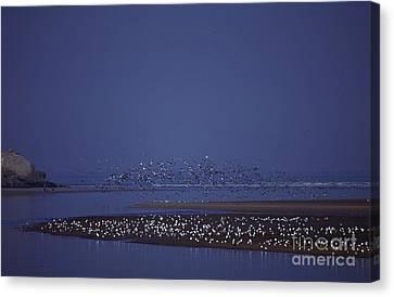 Rabat Bouregreg River Morocco Canvas Print by Antonio Martinho