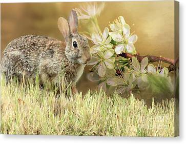 Eastern Cottontail Rabbit In Grass Canvas Print